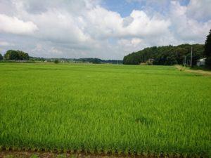 田園風景画像