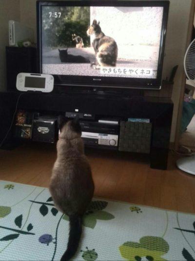 テレビの前の遊の画像