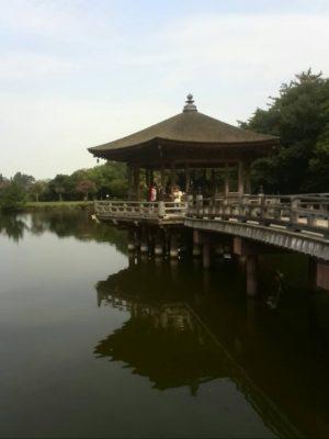 朝の奈良公園画像