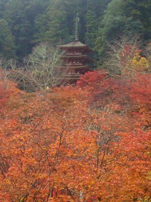 長谷寺五重塔画像