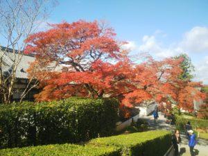 平等院紅葉画像