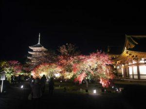 東寺ライトアップ境内画像