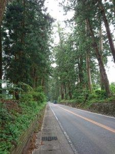 杉並木画像