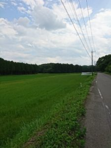 田んぼ道画像