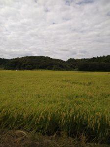田んぼの画像