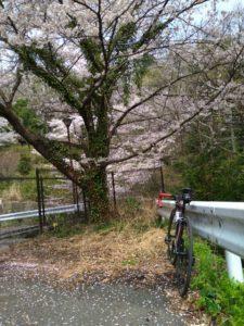 桜とロードバイク画像