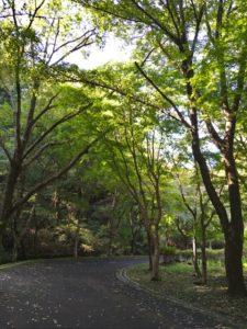 光が差し込む木々画像